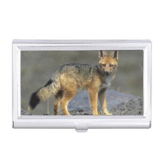 Andean Fox, (Dusicyon culpaeus), Paramo Cotopaxi Business Card Holder