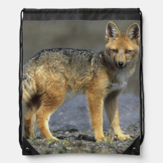 Andean Fox, (Dusicyon culpaeus), Paramo Cotopaxi Drawstring Bag