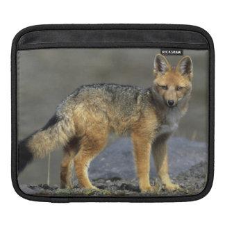 Andean Fox, (Dusicyon culpaeus), Paramo Cotopaxi iPad Sleeve