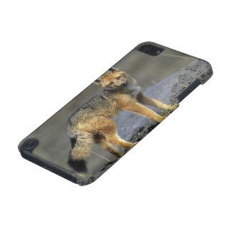 Andean Fox, (Dusicyon culpaeus), Paramo Cotopaxi iPod Touch 5G Covers