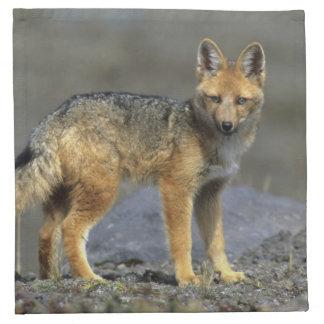 Andean Fox, (Dusicyon culpaeus), Paramo Cotopaxi Napkin