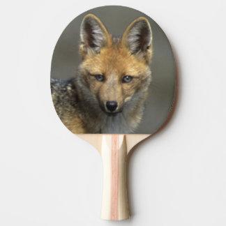 Andean Fox, (Dusicyon culpaeus), Paramo Cotopaxi Ping Pong Paddle