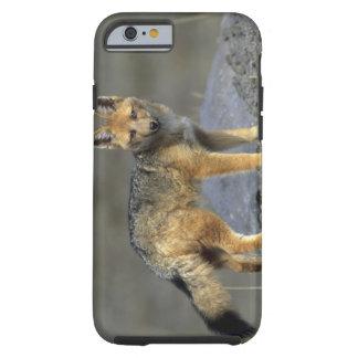 Andean Fox, (Dusicyon culpaeus), Paramo Cotopaxi Tough iPhone 6 Case