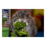 Andora the bunny: Parsley Attack Poster
