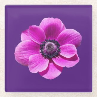 Anemone de Caen Flower Glass Coaster