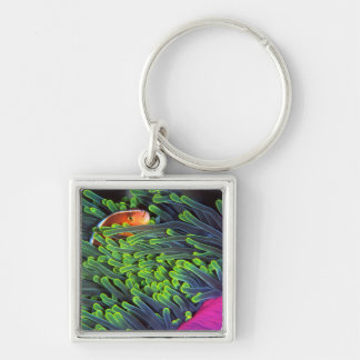 Anemone Fish Hiding In Anemone, Mozambique 2 Silver-Colored Square Key Ring