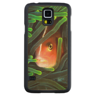 Anemone Fish Hiding In Anemone, Mozambique Maple Galaxy S5 Slim Case
