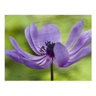 anemone in the garden postcard