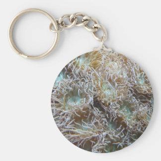 anemone key chains