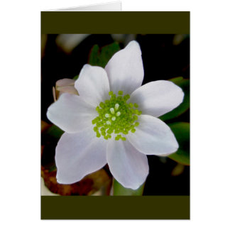 Anemone Note Card