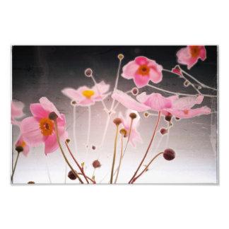anemone photo print