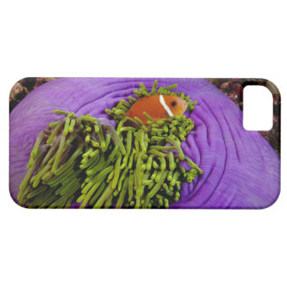 Anemonefish and large anemone case for the iPhone 5