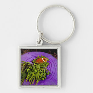 Anemonefish and large anemone Silver-Colored square key ring