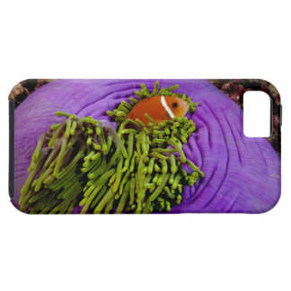 Anemonefish and large anemone tough iPhone 5 case