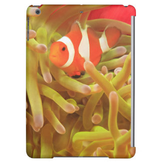anemonefish on giant indo pacific sea anemone,