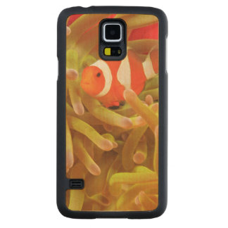 anemonefish on giant indo pacific sea anemone, carved maple galaxy s5 case