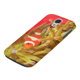 anemonefish on giant indo pacific sea anemone, galaxy s4 case
