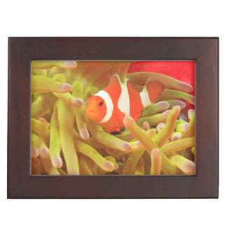 anemonefish on giant indo pacific sea anemone, keepsake box