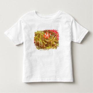 anemonefish on giant indo pacific sea anemone, tshirt