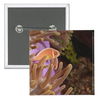 anemonefish, Scuba Diving at Tukang 15 Cm Square Badge