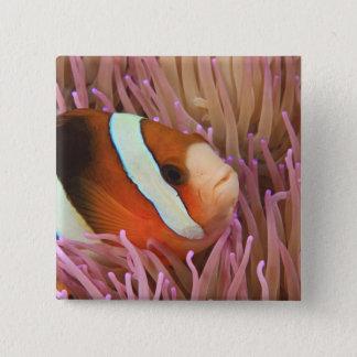 anemonefish, Scuba Diving at Tukang 2 15 Cm Square Badge