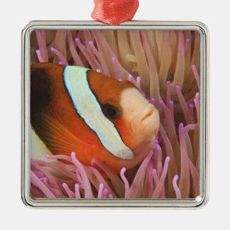 anemonefish, Scuba Diving at Tukang 2 Christmas Ornament