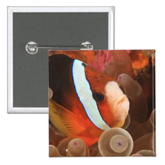 anemonefish, Scuba Diving at Tukang 3 15 Cm Square Badge