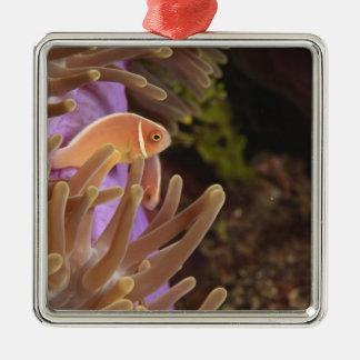 anemonefish, Scuba Diving at Tukang Christmas Ornament