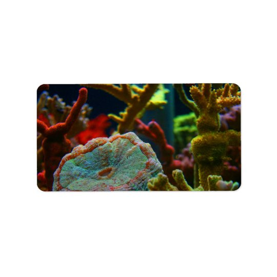 anenome saltwater image coral aquarium tank address label