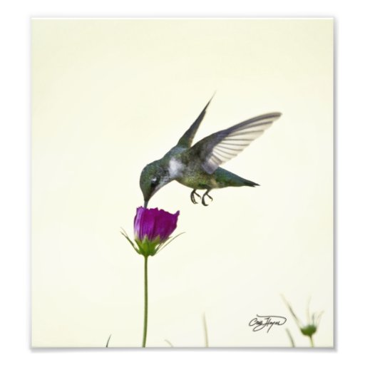 Angel in flight Photographic Art Photo Print