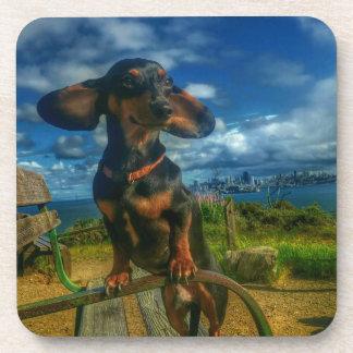 Angel Island Coaster