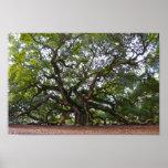 Angel Oak on Johns Island, South Carolina Poster