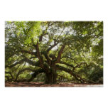 Angel Oak Tree ~ Johns Island, South Carolina Poster