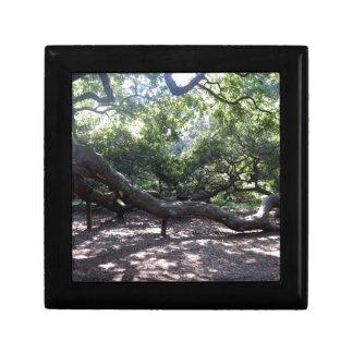 Angel Oak Tree Limbs Gift Box