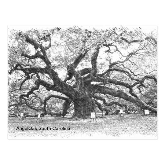 Angel Oak Tree Postcard