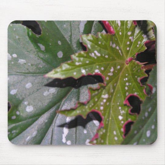 Angel Wing Begonias Mousepad