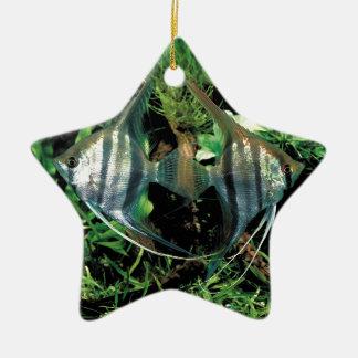 angelfish 2 ceramic star decoration