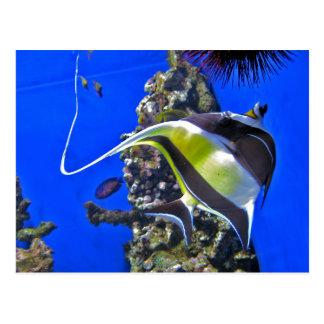 Angelfish at the Aquarium Postcard