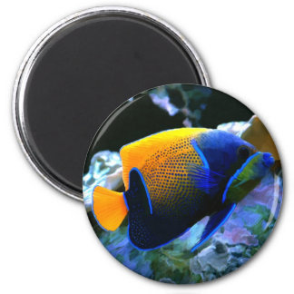 angelfish magnet