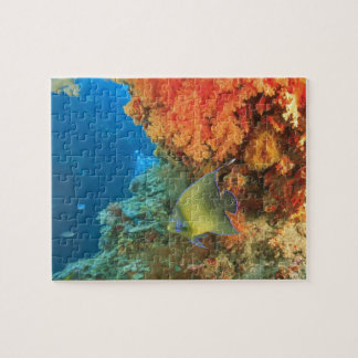 Angelfish swimming near orange soft coral, Bligh Jigsaw Puzzle
