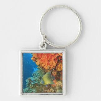Angelfish swimming near orange soft coral Bligh Keychains
