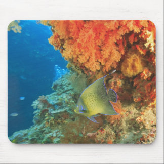 Angelfish swimming near orange soft coral, Bligh Mouse Mat