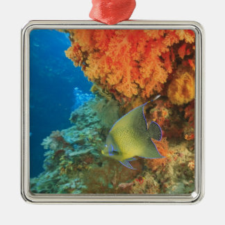 Angelfish swimming near orange soft coral, Bligh Silver-Colored Square Decoration