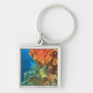 Angelfish swimming near orange soft coral, Bligh Silver-Colored Square Key Ring
