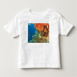 Angelfish swimming near orange soft coral, Bligh Toddler T-Shirt