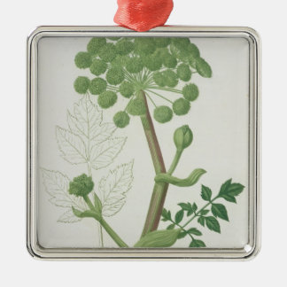 Angelica Archangelica from 'Phytographie Medicale' Christmas Ornament