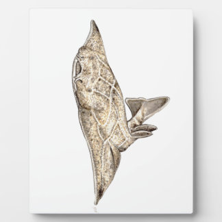 Angelote, shark angel photo plaques