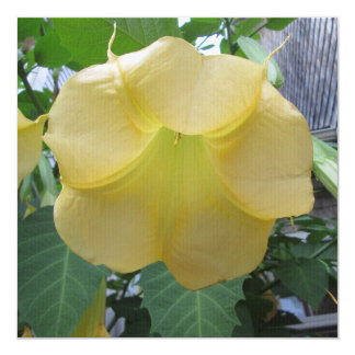 Angels Trumpet Golden Yellow Flower Custom Announcement