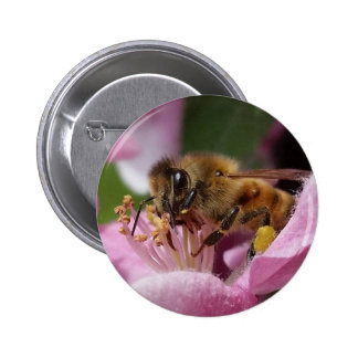 Angery Honey Bee On Pink Crabapple blossom 6 Cm Round Badge