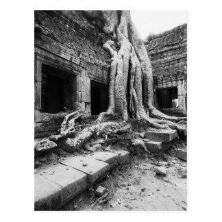 Angkor Cambodia Ta Prohm Tree Post Cards